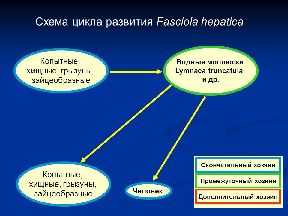 download Organizational Culture and Leadership (J