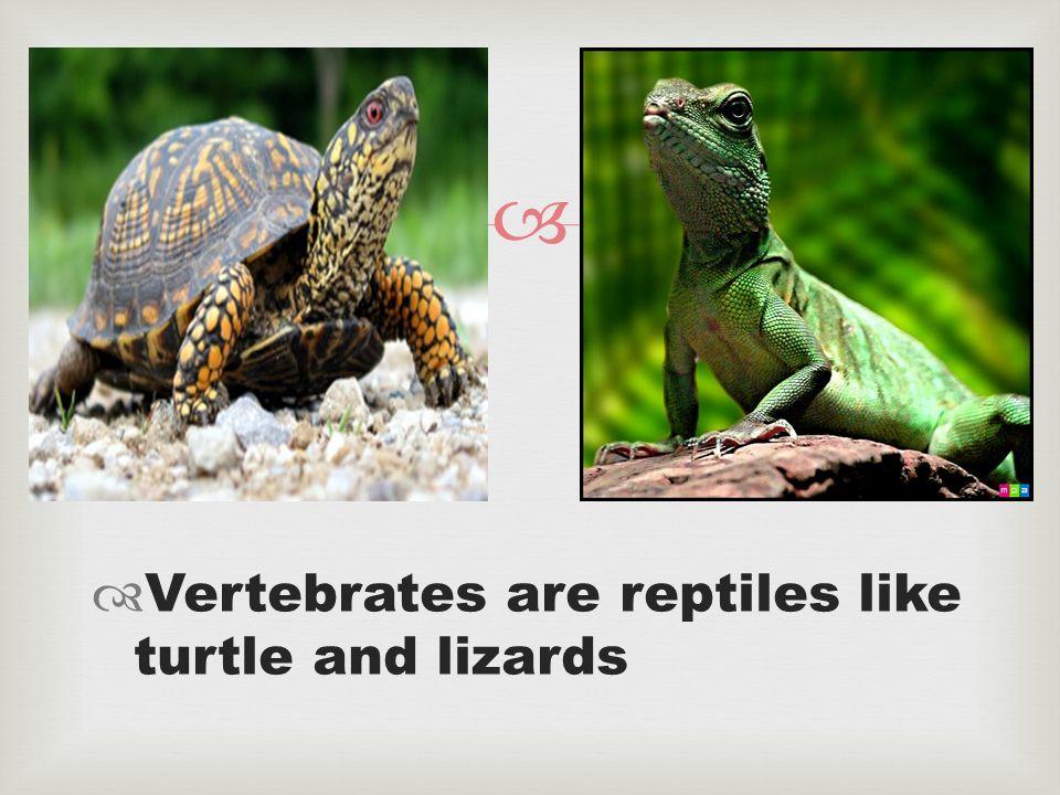 Amphibian  animal  Britannicacom