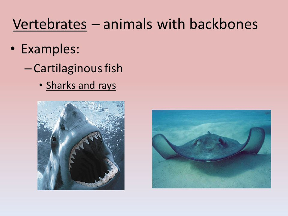 Types of Animals. - pp...