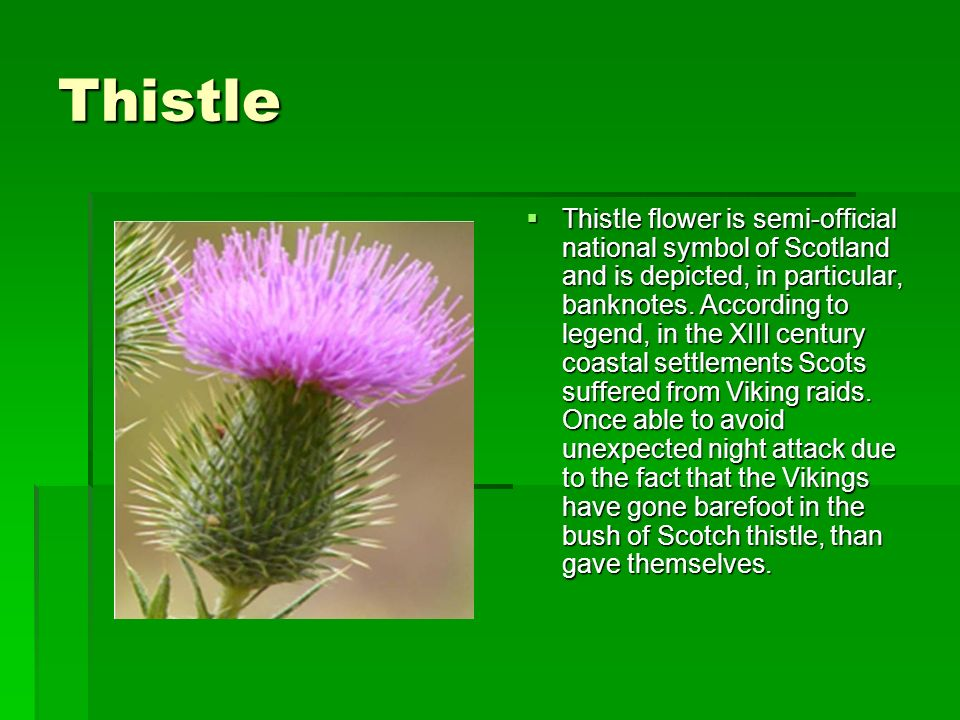The Symbols Of Scotland Ppt Video Online Download