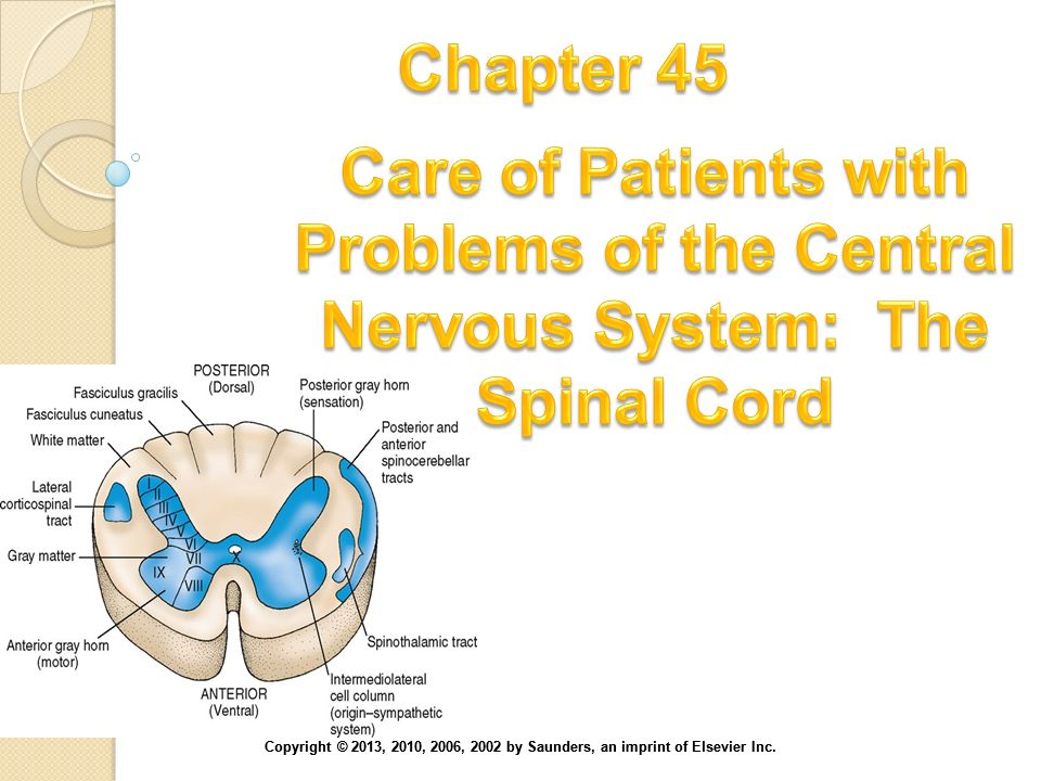 Chapter 45 Care of Patients with Problems of the Central Nervous System: The Spinal Cord.
