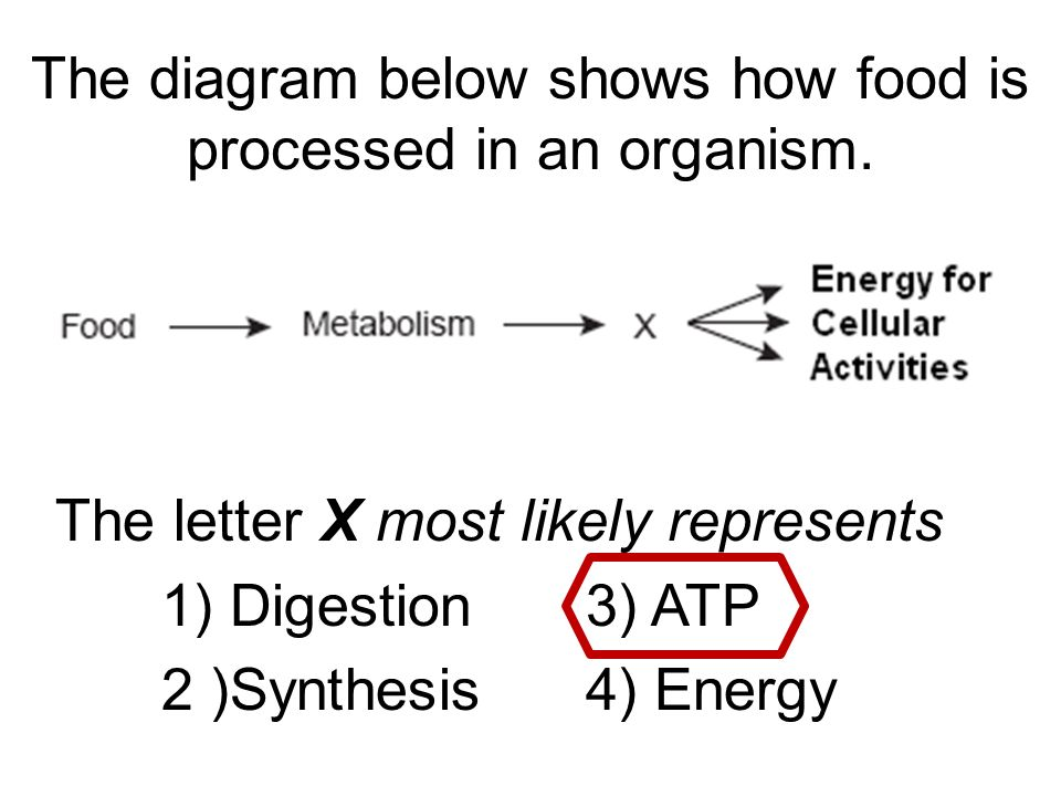 The diagram below shows how food is processed in an organism ...