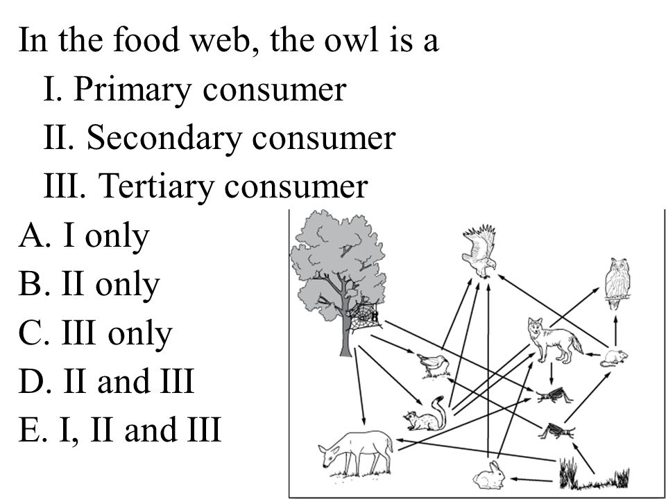 In the food web, the owl is a I. Primary consumer II