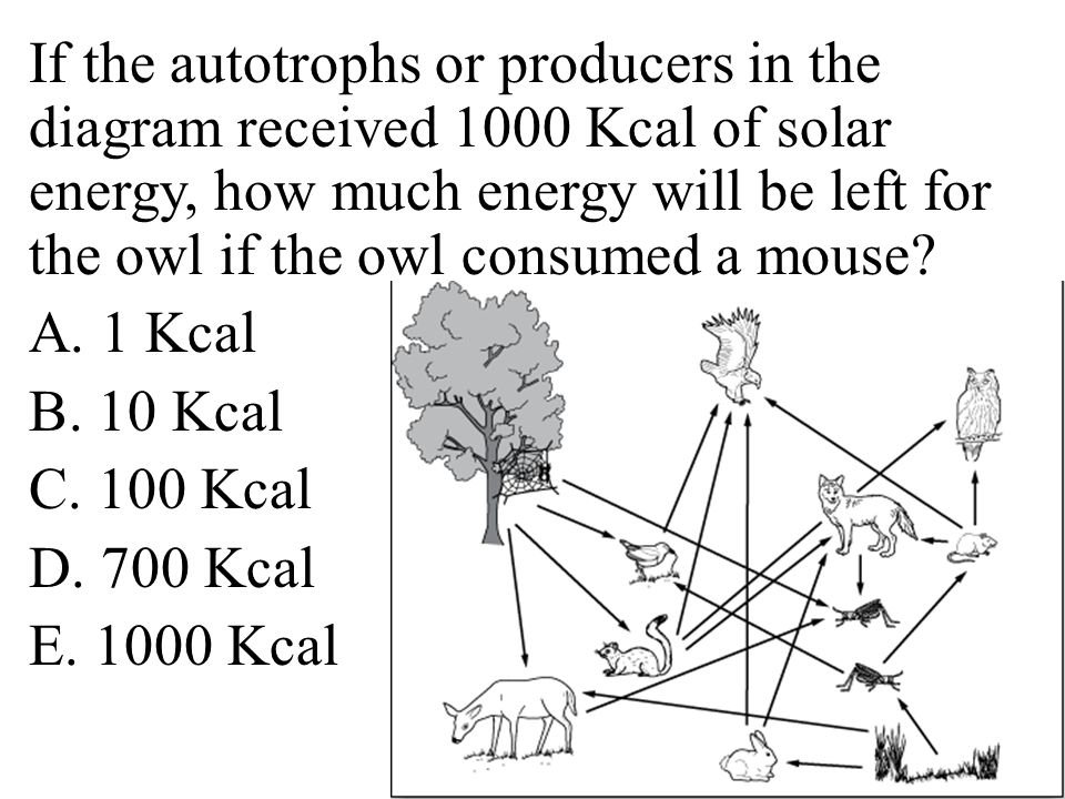 If the autotrophs or producers in the diagram received 1000 Kcal of solar energy, how much energy will be left for the owl if the owl consumed a mouse.