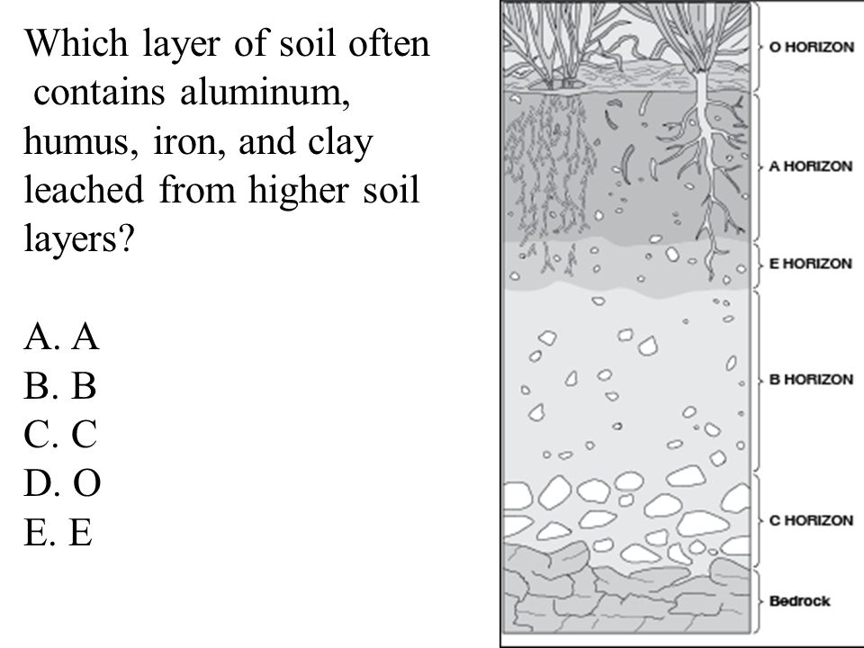 Which layer of soil often contains aluminum, humus, iron, and clay leached from higher soil layers.