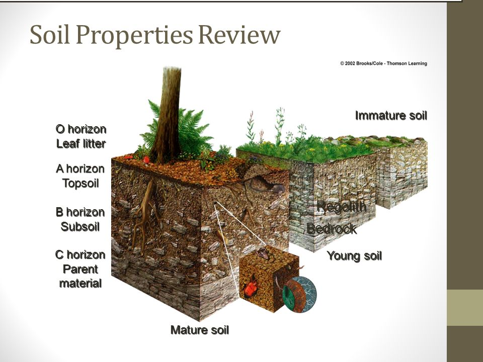 food and soil resources ppt video online download