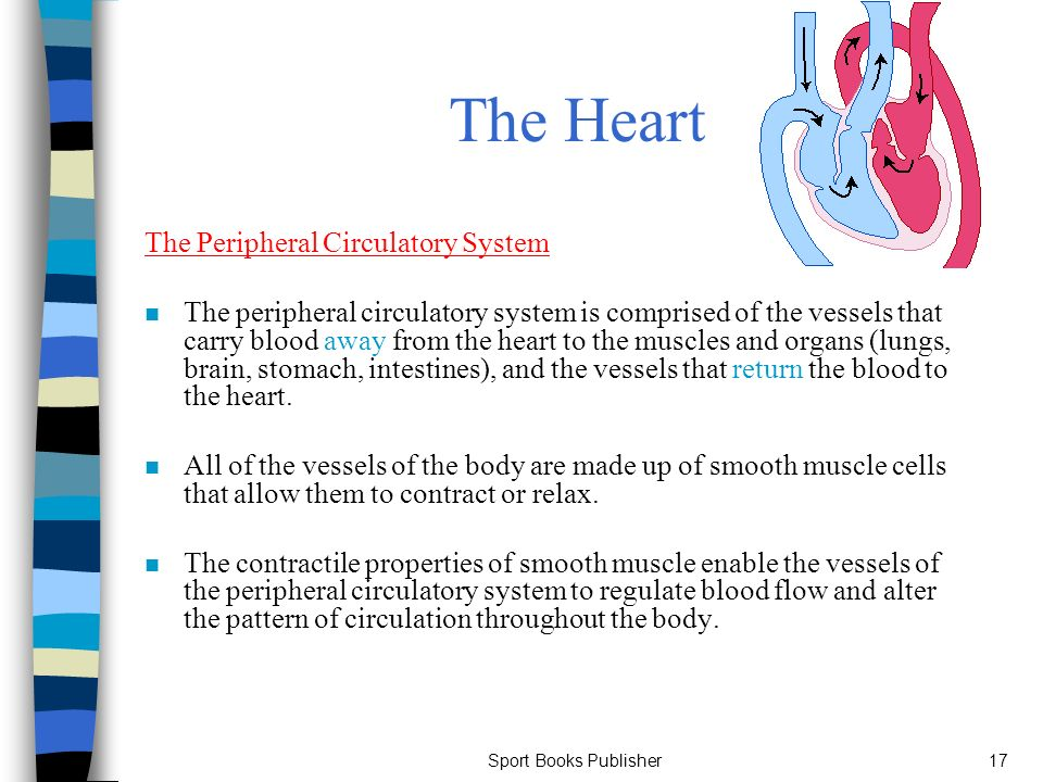 The Heart and Lungs at Work Chapter 6 - ppt download