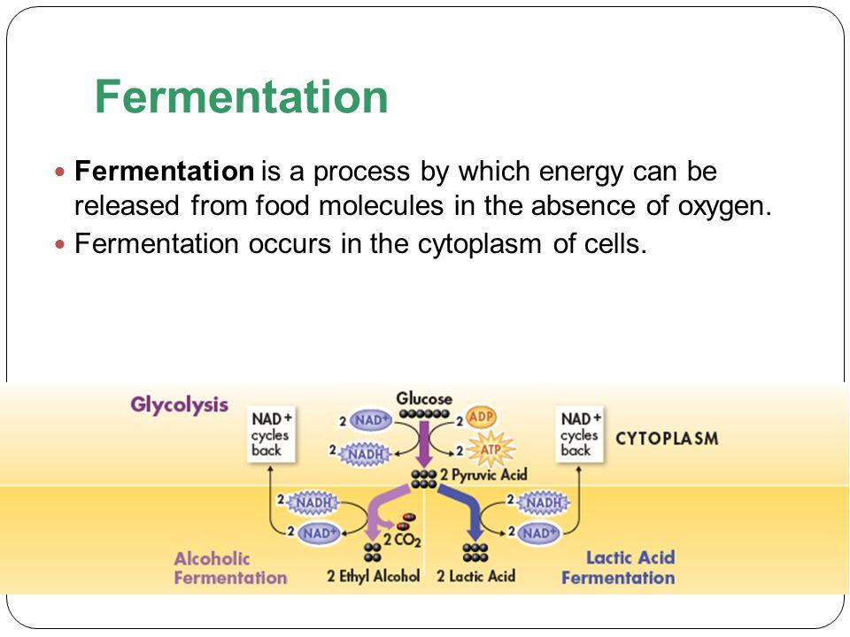 Chapter 9 Cellular Respiration and Fermentation ppt video online – Fermentation Worksheet