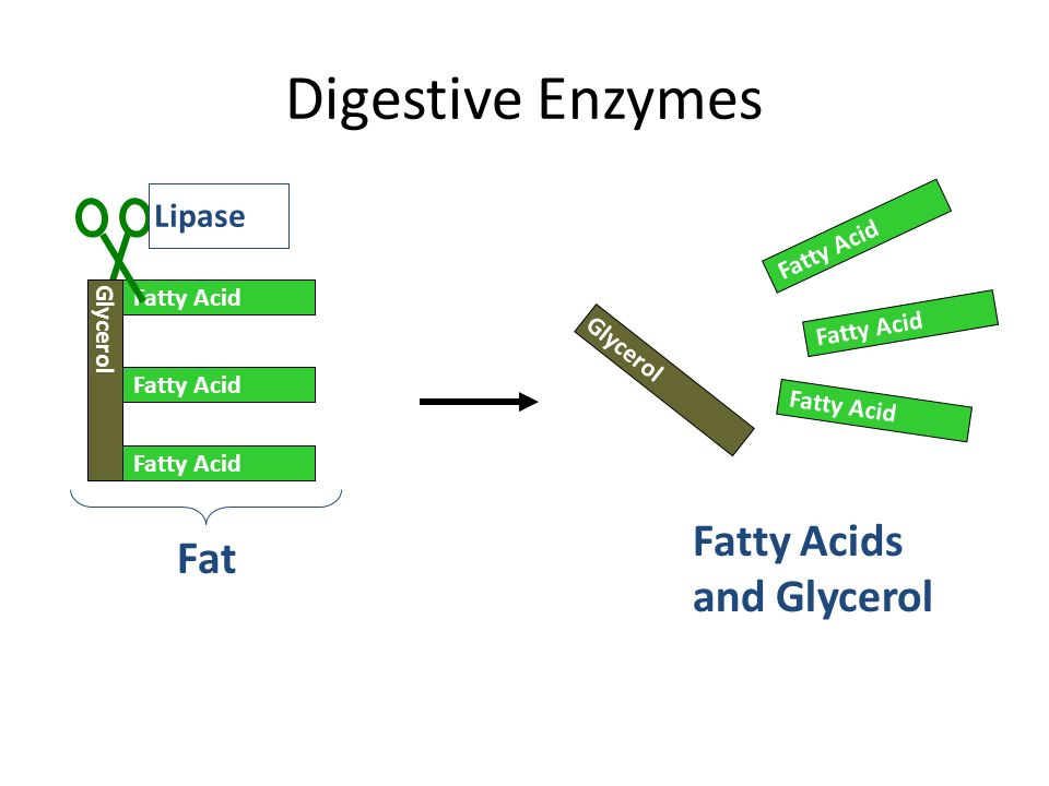 an examination on the factors that affects the rate of digestion of gelatin by the protease trypsin Gelatinase digests gelatin and collagen, two large proteins in meat, into moderately-sized compounds whose digestion is then completed by pepsin, trypsin and chymotrypsin, producing amino acids references (6).