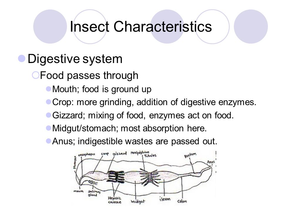 Insect characteristics ppt download insect characteristics ccuart Choice Image