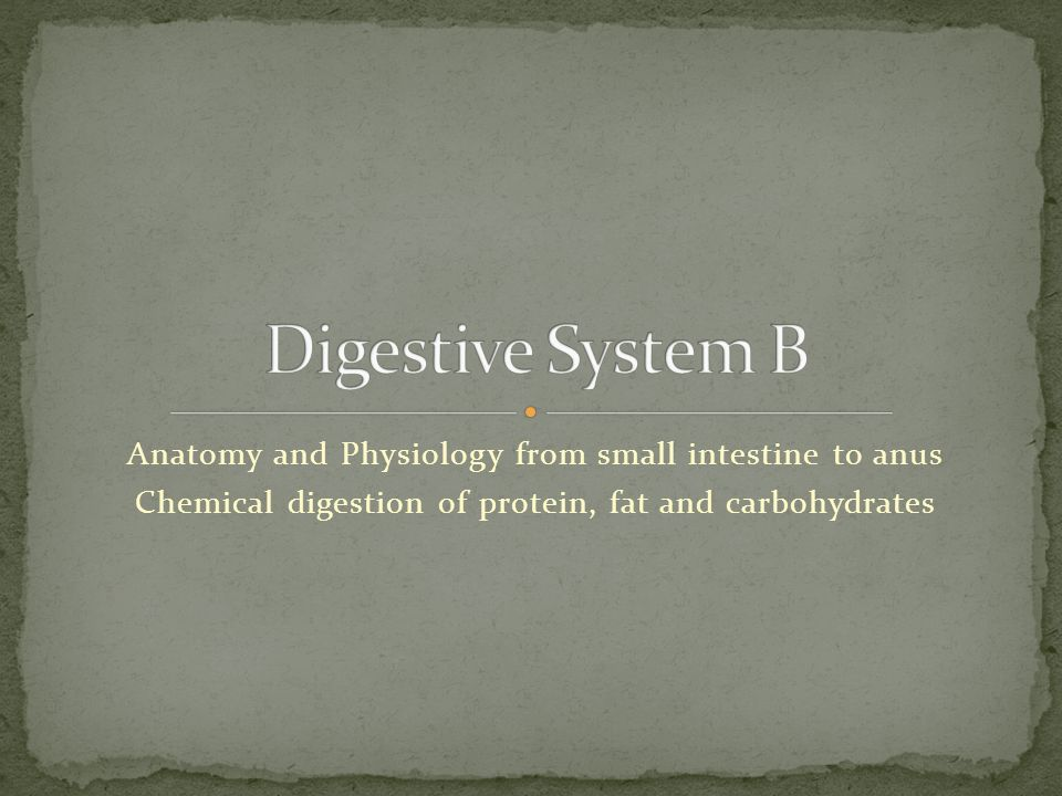 Digestive System B Anatomy and Physiology from small intestine to ...