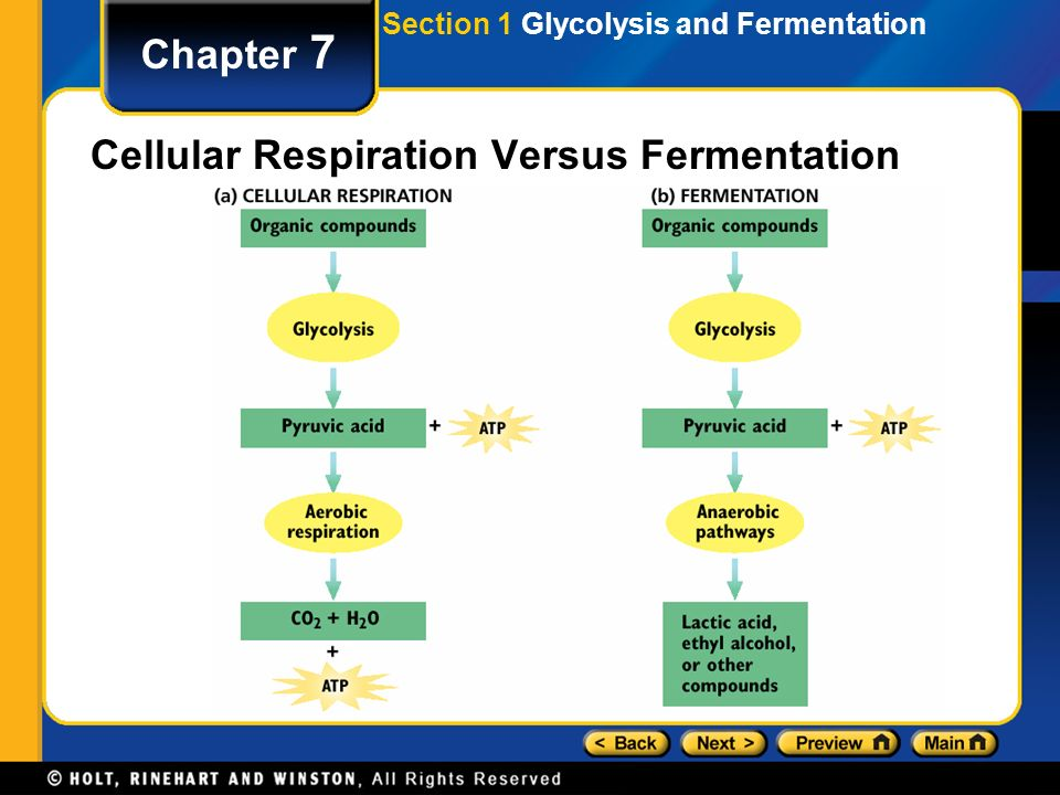cellular respiration through alcoholic fermentation essay Fermentation only produces two atp per glucose molecule through glycolysis, which is much less atp than cellular respiration directions : use the animation below to review both lactic acid fermentation and alcoholic fermentation.