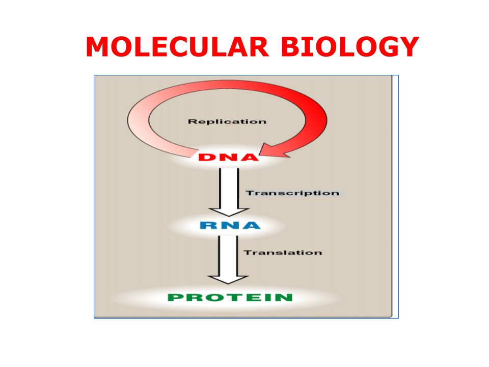 introduction to molecular biology ppt download