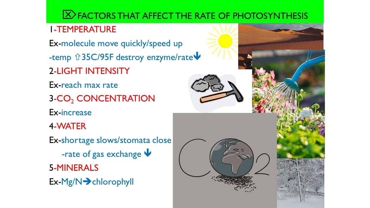 3 factors that affect the rate of photosynthesis This site might help you re: describe the 3 factors that affect the rate at which photosynthesis occurs please help me someone.