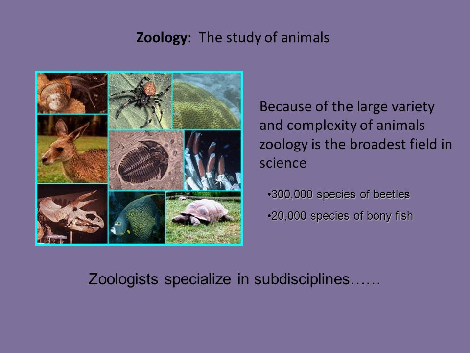 zoology study of animal lives Study zoology abroad | zoology abroad programs are so unique that perhaps no   the world's various ecosystems are rife will all types of animal life, with new.