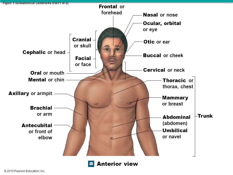 ch 1 what anatomy really means 19 chapters in uexcel anatomy & physiology: study guide & test prep 1 practice chapter exam - basic anatomy and cell biology.