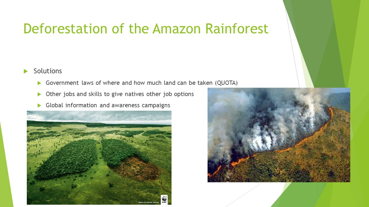 deforestation and pollution