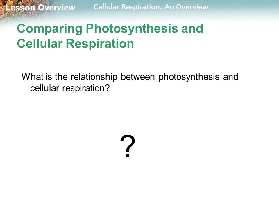description of the relationship between photosynthesis and cellular respiration