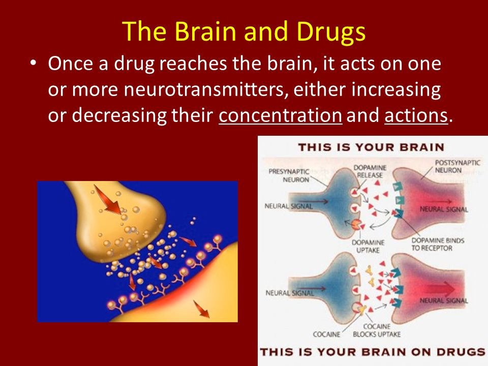 drugs affect on brain The effects of prenatal exposure to drugs on brain development are complex and are modulated by the timing, dose, and route of drug exposure it is difficult to assess these effects in clinical cohorts, which are beset with multiple exposures and difficulties in documenting use patterns this can.