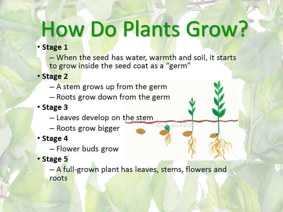 does a plant grow bigger if 2017-10-29  rootblast not only made this plant grow faster, but it  bigger roots mean bigger plants, its that simple faq's q does rootblast contain hormones a.