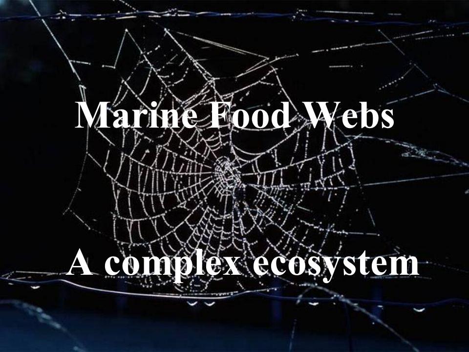 1 marine food webs a complex ecosystem