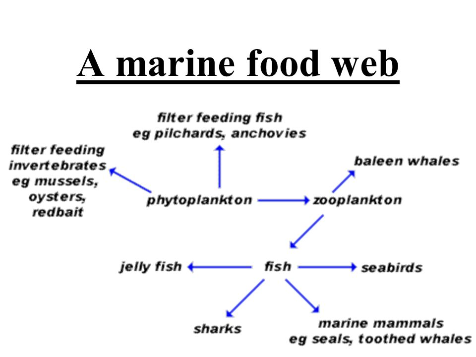 Basic Marine Food Web