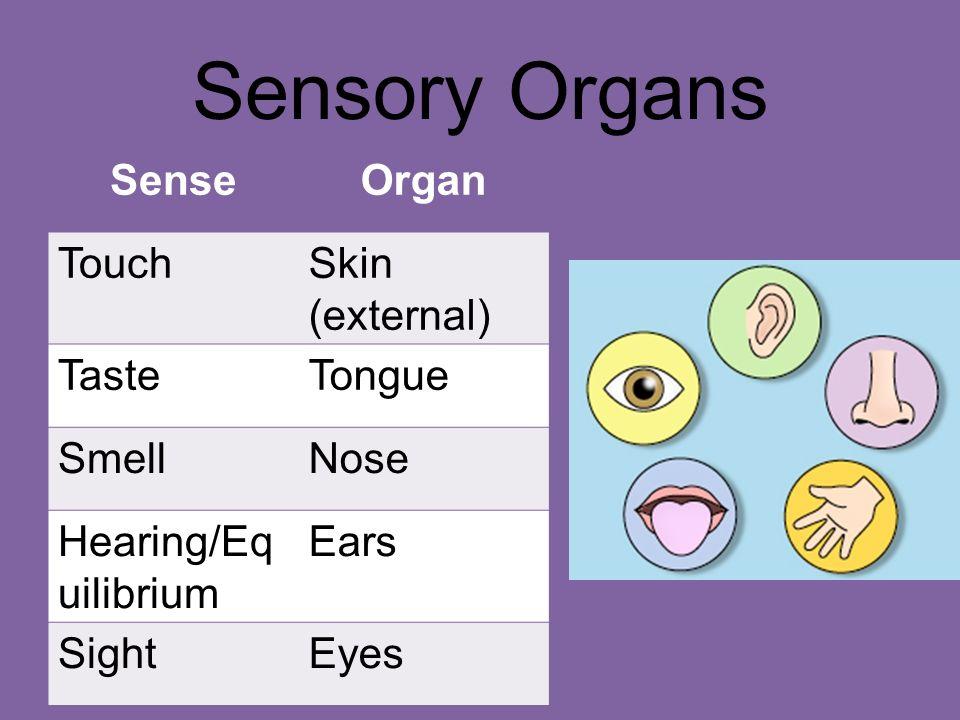 Sensory System Chapter Ppt Video Online Download