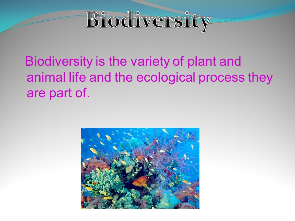 a view on the biodiversity and the variety of life