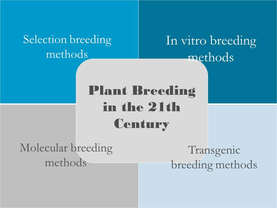 transgenesis and selective breeding Selective breeding vs transgenesis selective breeding is a way for humans to nurture desirable traits in plants and animals, but it is much older and less scientific than transgenesis.