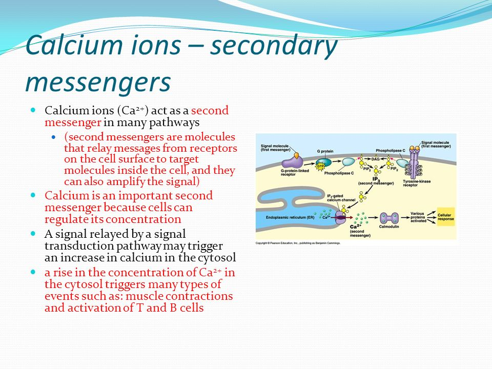 importance of calcium ions The body contains more calcium than any other mineral calcium and phosphorus account for 75% of total mineral element in the body the new born infant has about 28gm of calcium as a store.