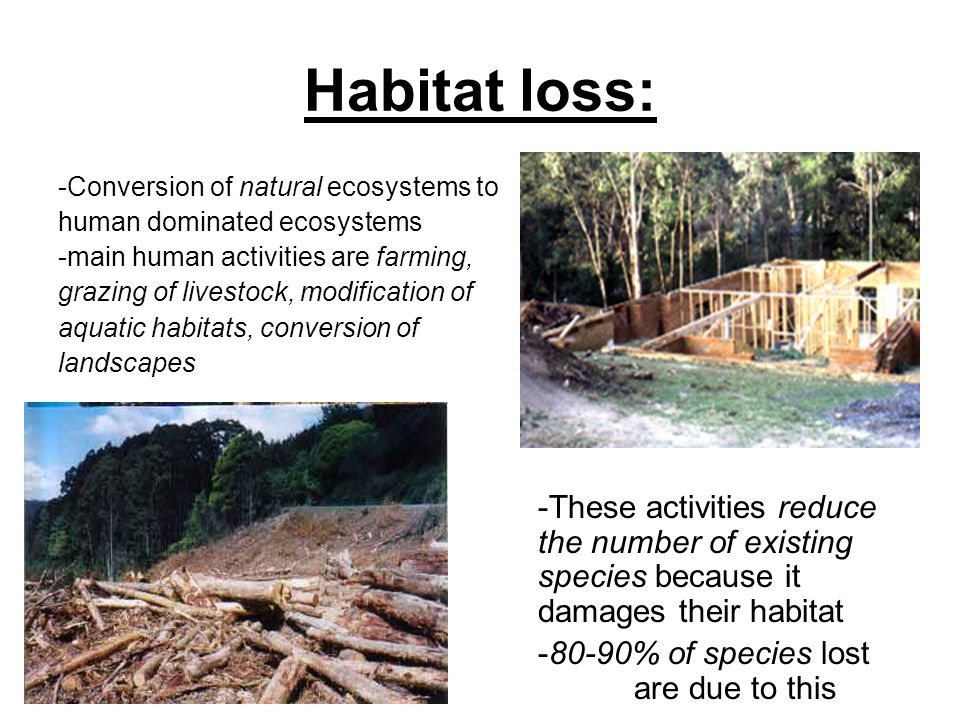 habitat loss 2008 final spotted owl recovery plan threats loss of habitat historical levels of old-growth/mature forest and rates of loss.