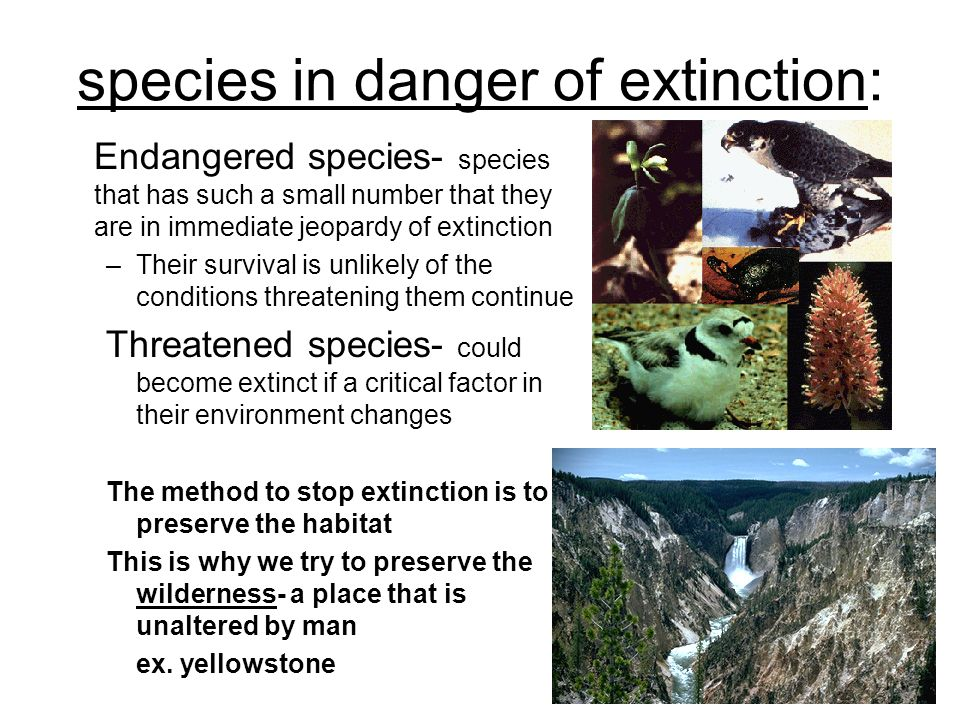 why preserving endangered species is unrealistic Saving animals from the endangered species list is necessary for our  with this  problem, these two courses of action are the most realistic.