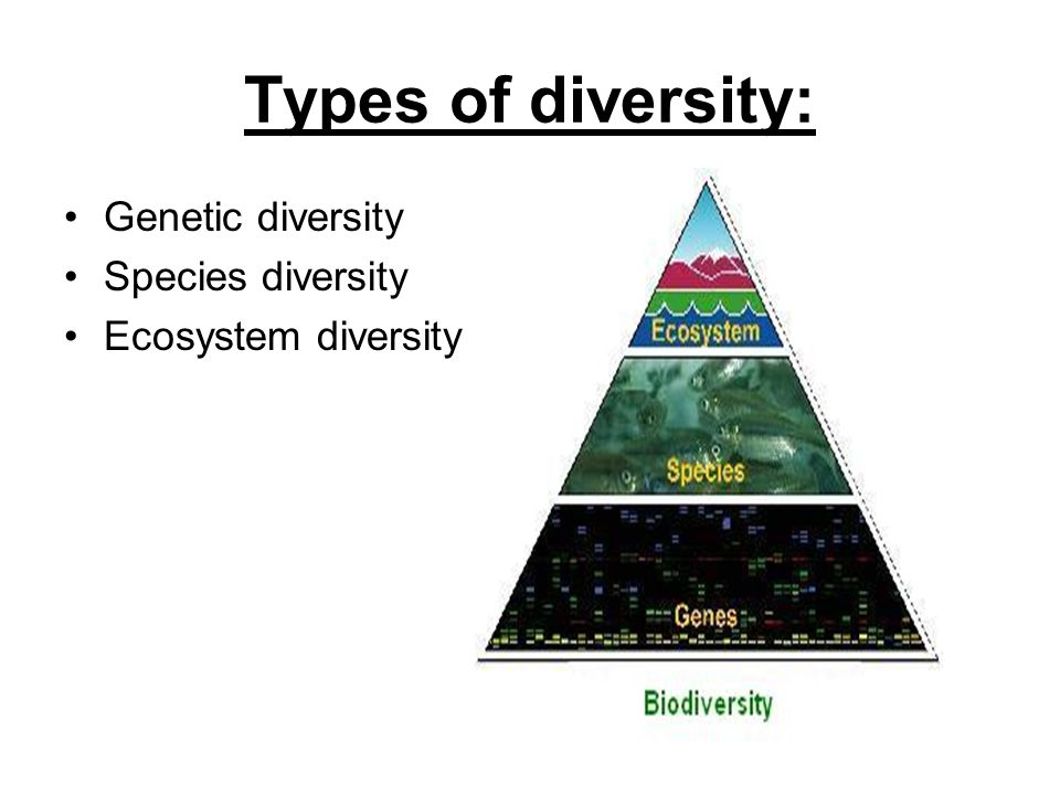 The importance of genetic diversity