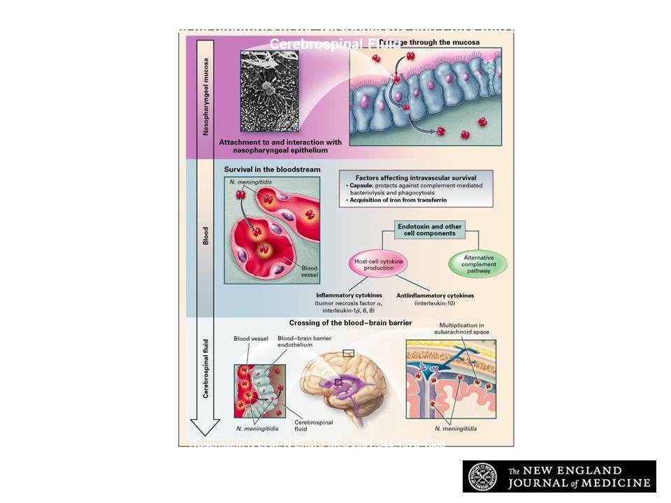 Neisseria Meningitidis Case Study Ppt Video Online Download