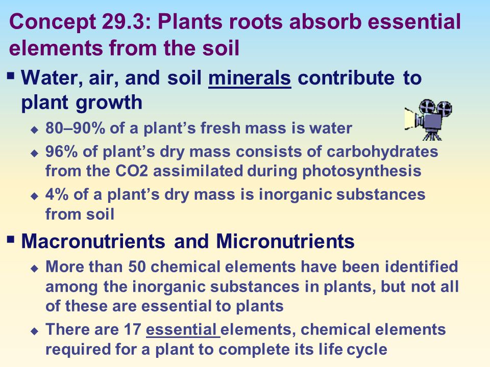 an overview of the twenty essential elements for the plant growth 372 plants require essential elements by rommy obeid hypotheses of plant growth aristotle thought the plants ate the soil jan baptista van helmont wanted to test this hypothesis using an experiment slideshow 2511615 by china.