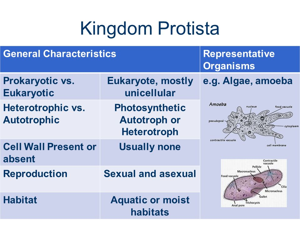 general characteristics of protista Protista i introduction protista, group of comparatively simple organisms, called protists, that have characteristics of both plants and animals.