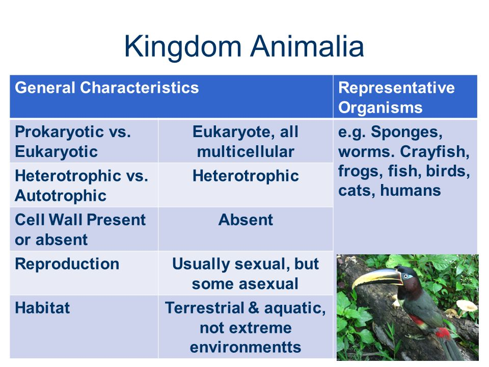all about kingdom animalia pdf