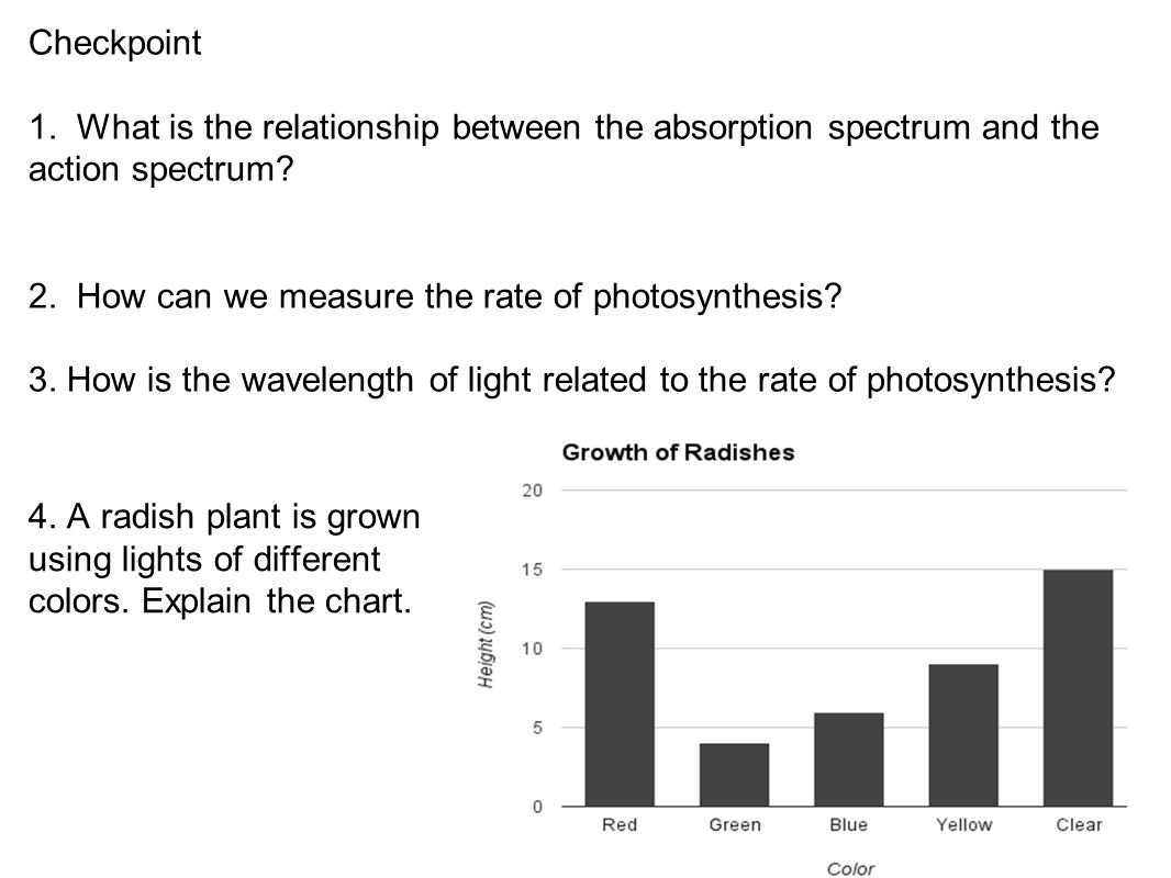 light wavelength and photosynthetic rate relationship