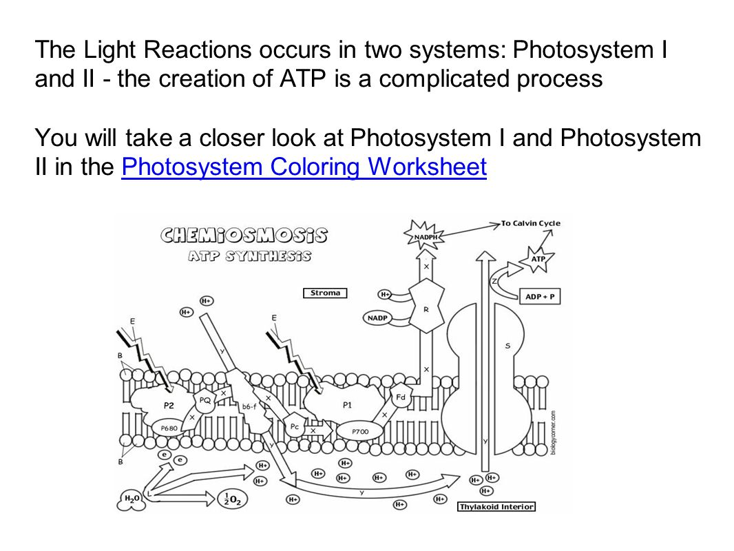 chapter 7 photosynthesis ppt video online download. Black Bedroom Furniture Sets. Home Design Ideas