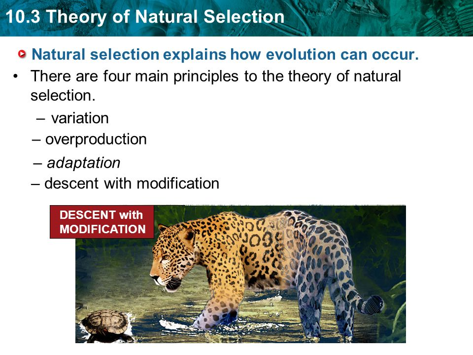 How Does Evolution Occur Through Natural Selection