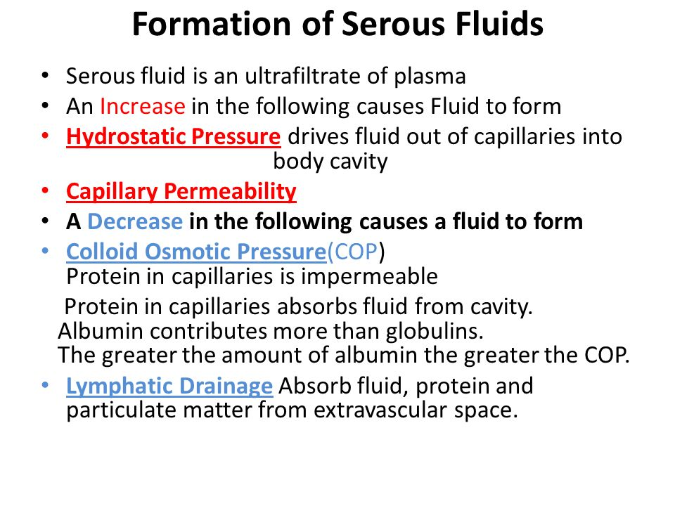 Formation of Serous Fluids