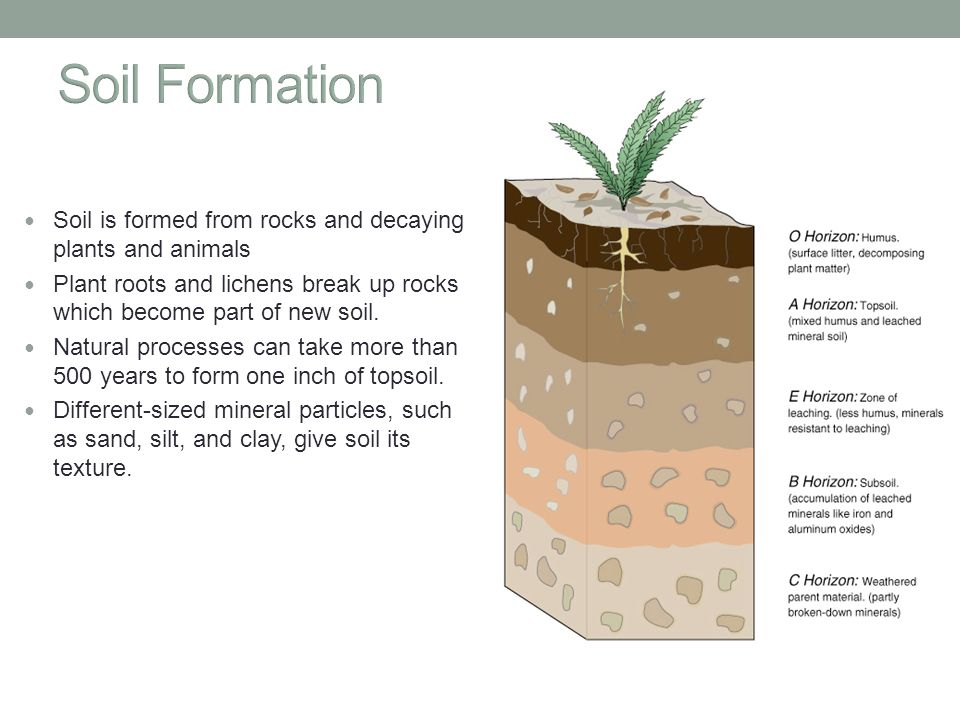 Food soil pest management ppt video online download for Soil formation