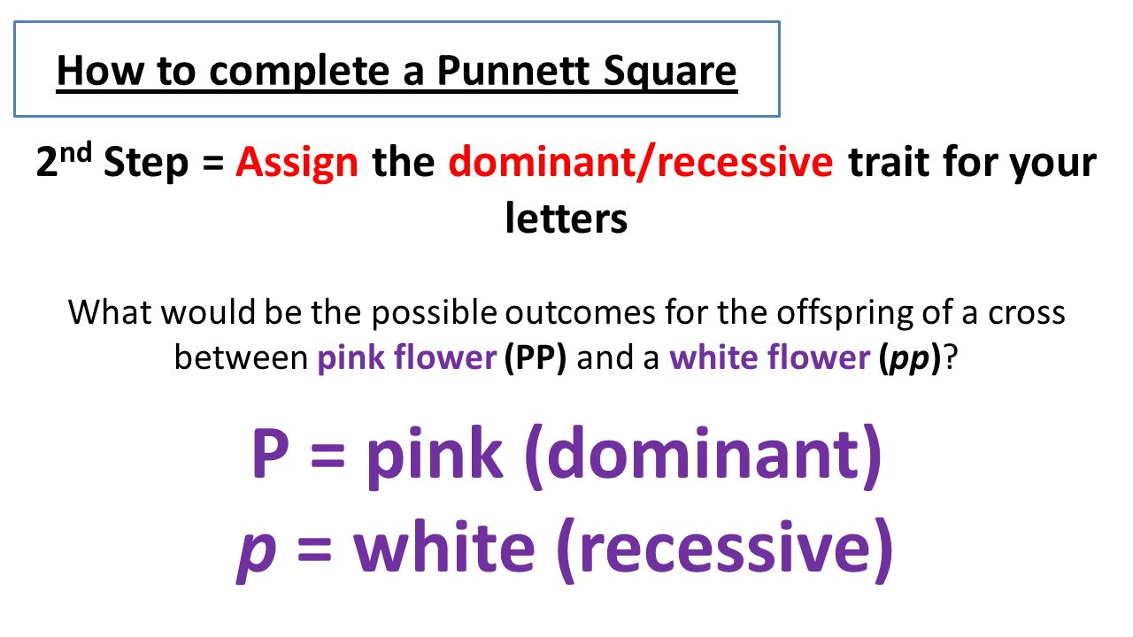 Completing The Square Word Problems 2 How Toplete A Punnett Square