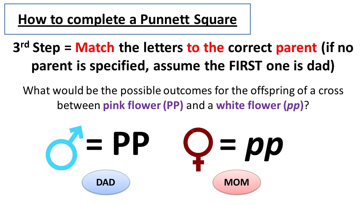 How Toplete A Punnett Square