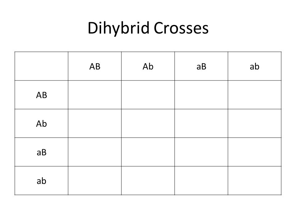 Genetic Story Problems ppt download – Dihybrid Cross Problems Worksheet