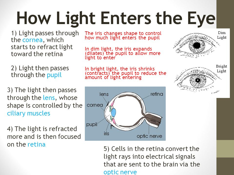 Image result for light enters through the pupil
