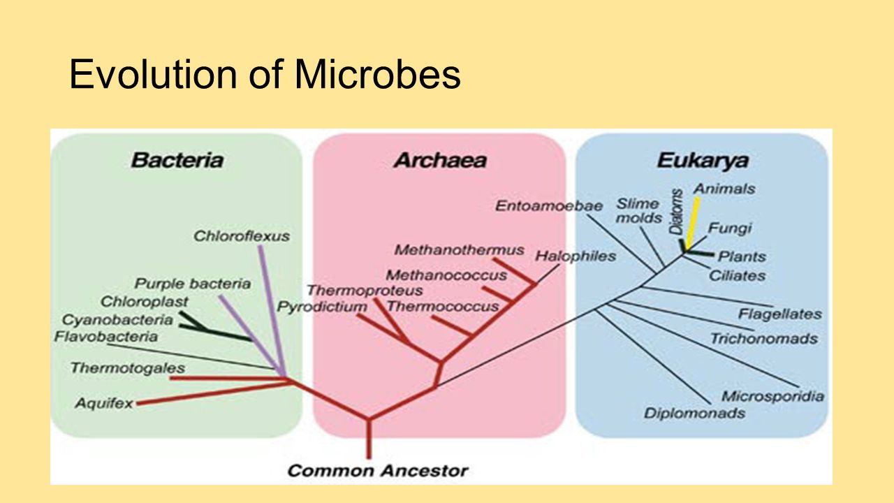 Evolution and microbiology