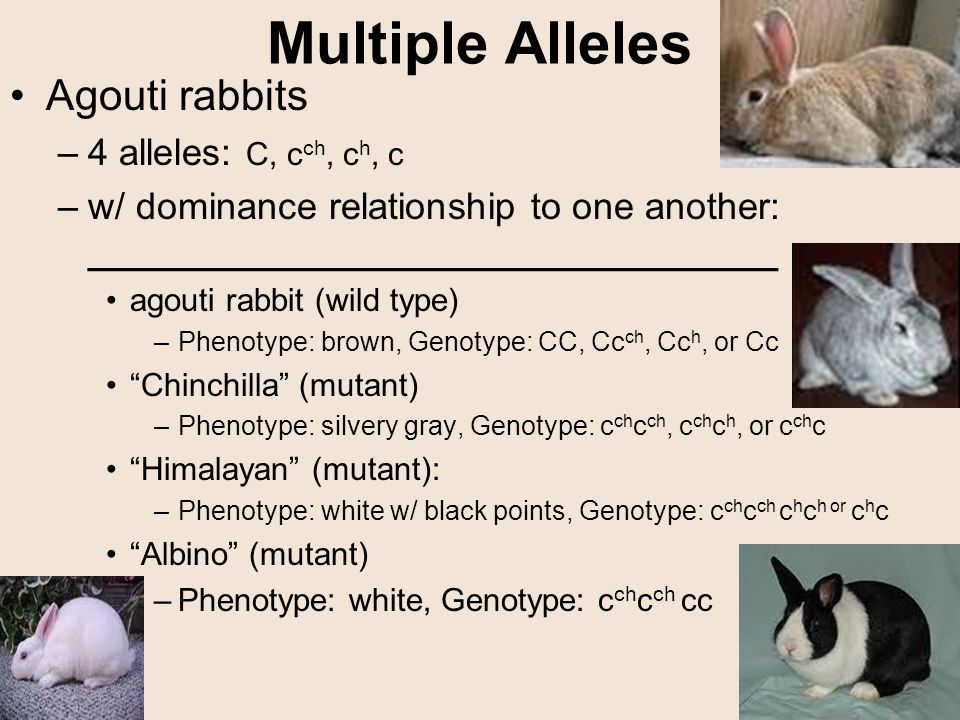 Unit 6: Genetics & Heredity Ch 8: Heredity & Ch 11: Human ...