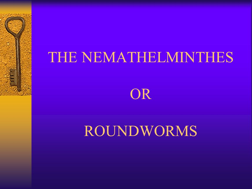 platyhelminthes nemathelminthes ppt