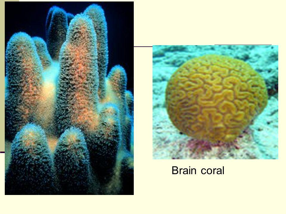 Anus has more nerve endings than brain - 3 part 8